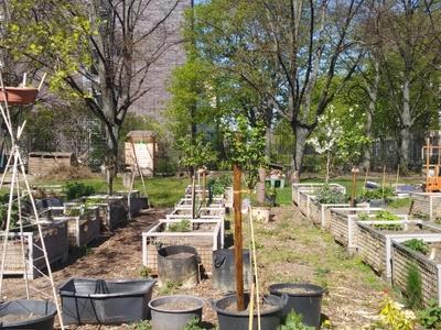 Foto Urban Gardening